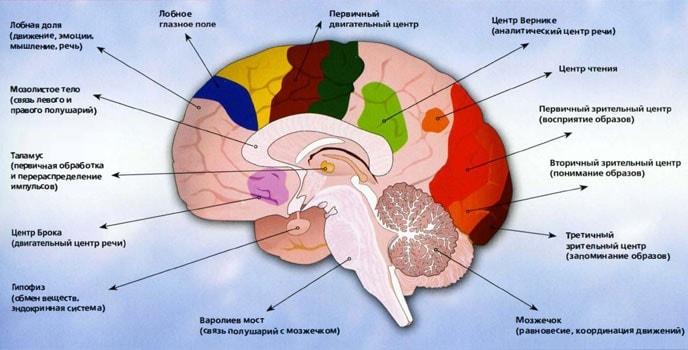 что в голове человека