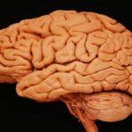 Как работает головной мозг человека — восприятие и переработка информации