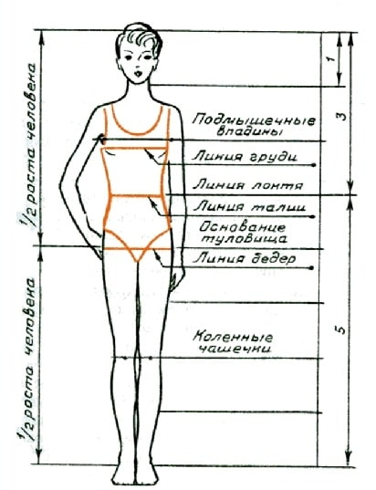 Пропорции тела женщин